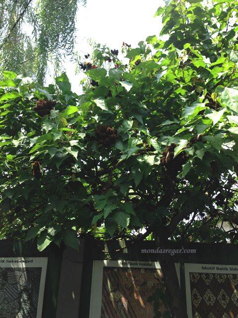 pohon piksa