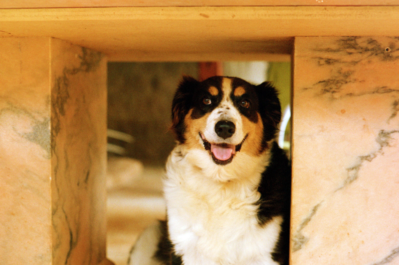 Family dogs and dog breeds:  We need your help