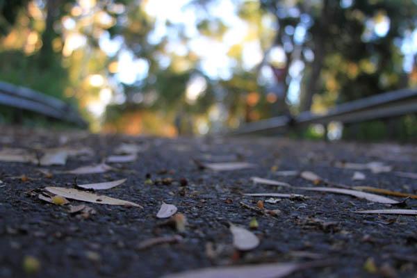 Hiking path, pupukea, at thegrommom.com