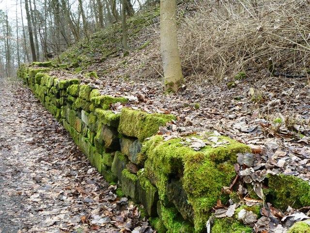 Path to Birkenkopf Stuttgart, Germany