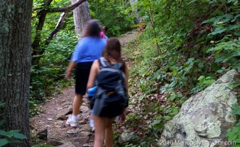 Our Wildlife Encounter on Lewis Falls Trail