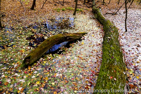 Leaves covering the waters of this saturated pond hidden in the forest