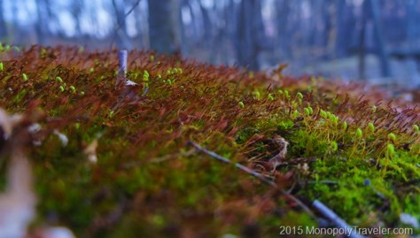 Moss Actively Growing