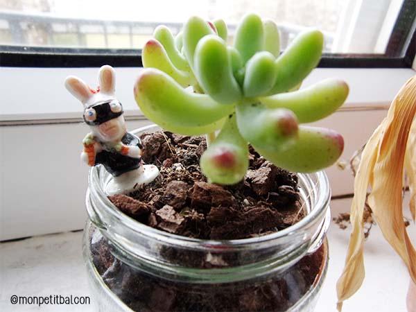 Jour 10 : plantes succulents d'intérieur et lapin crétin en décoration