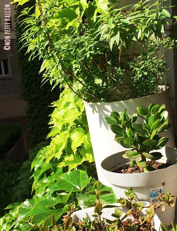 balcon potager en famille à Paris plante verte sur mon petit balcon