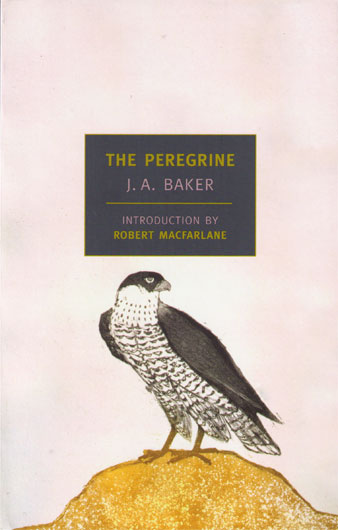 The-Peregrine