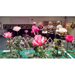 Traditional My Customers Who Wishes To Remain Nameless Has Won Blue Ribbons At October 2015 Garden Club Rose Show She Uses Moose Hill Colorado Springs Independent Moose Hill Worm Farm One houzz 01 Worm Gold Plus