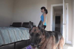 犬との共生