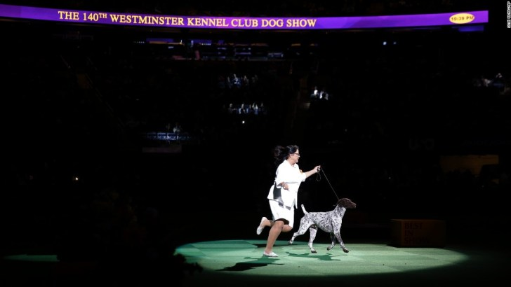 160217114102-02b-westmileftdog-show-super-169