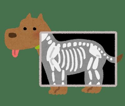 pet_xray_dog