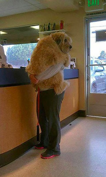pets_really_dont_enjoy_visits_to_the_vet_640_14