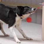 iq-test-dogs-2-exlarge-169
