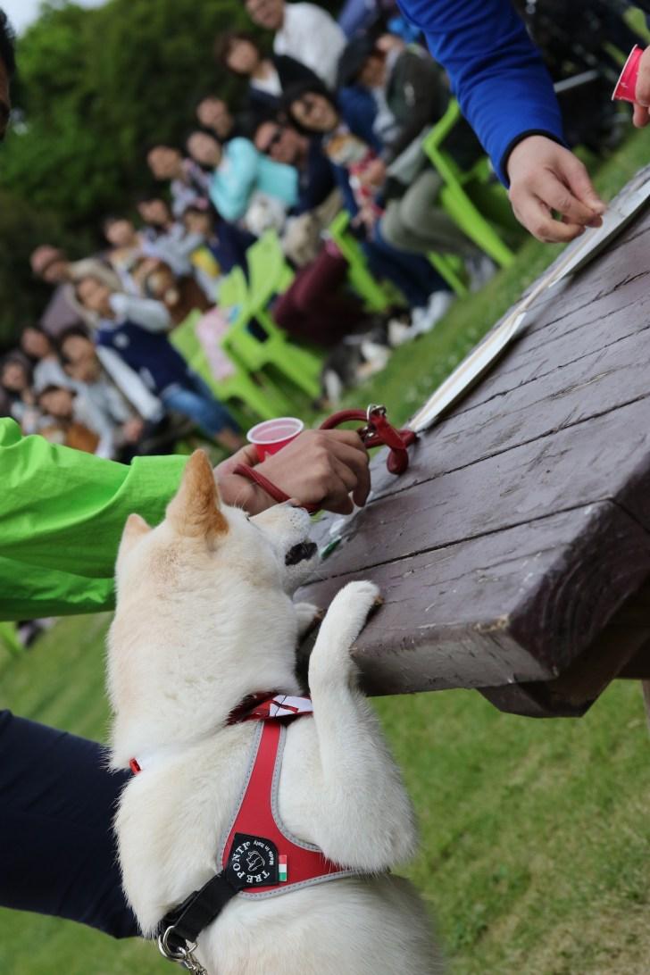 日本犬祭 モラキジドッグ