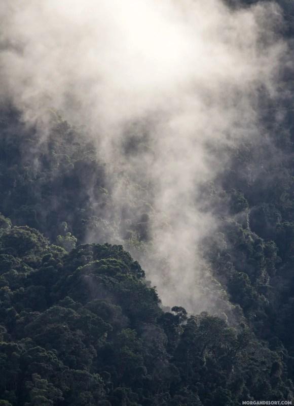 La forêt respire, pour nous