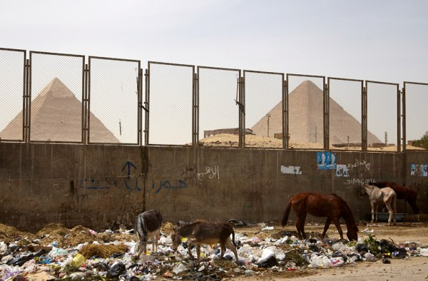 The sad Horses from the Pyramids