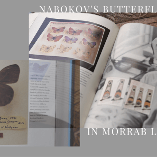 Morrab Library photographs -Nabokov's Butterflies is edited and annotated by Brian Boyd & Robert Michael Pyle, published by Penguin
