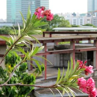 Views from Supalai Park, Srinakarin, Bangkok
