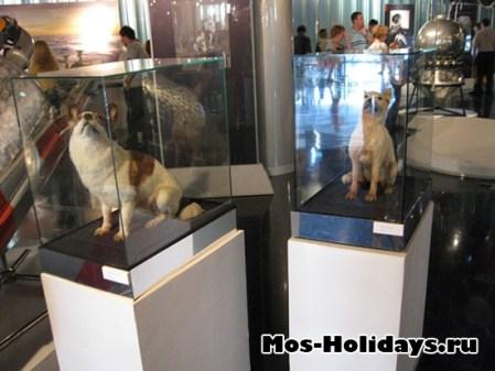 Первые собаки в космосе - Белка и Стрелка