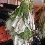 IMG_1375-herb-hang
