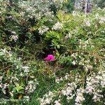 IMG_1398-pinksurounded-white