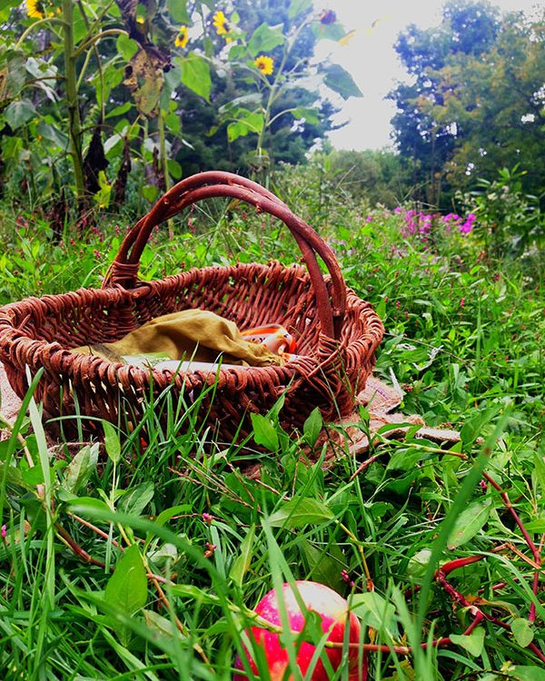 IMG_1401-apple-basket