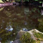 IMG_1437-far-ripple-mudball