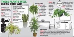 plants-room