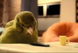 robinsons_bird