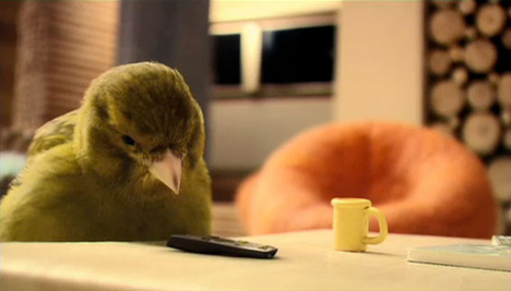 robinsons_birdhouse
