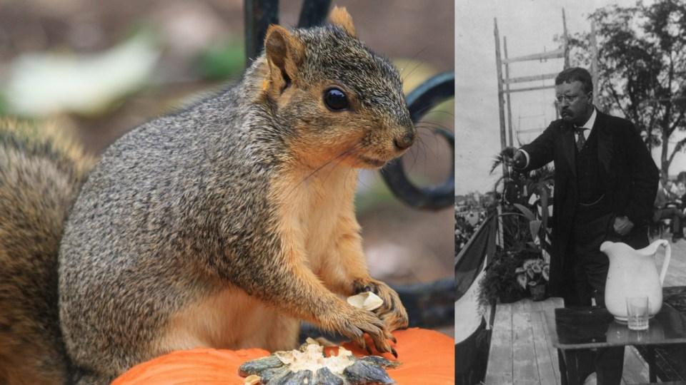 TR-squirrel