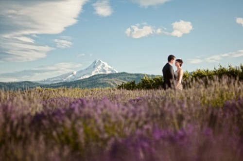 bride and groom in a lavender field under Mount Hood