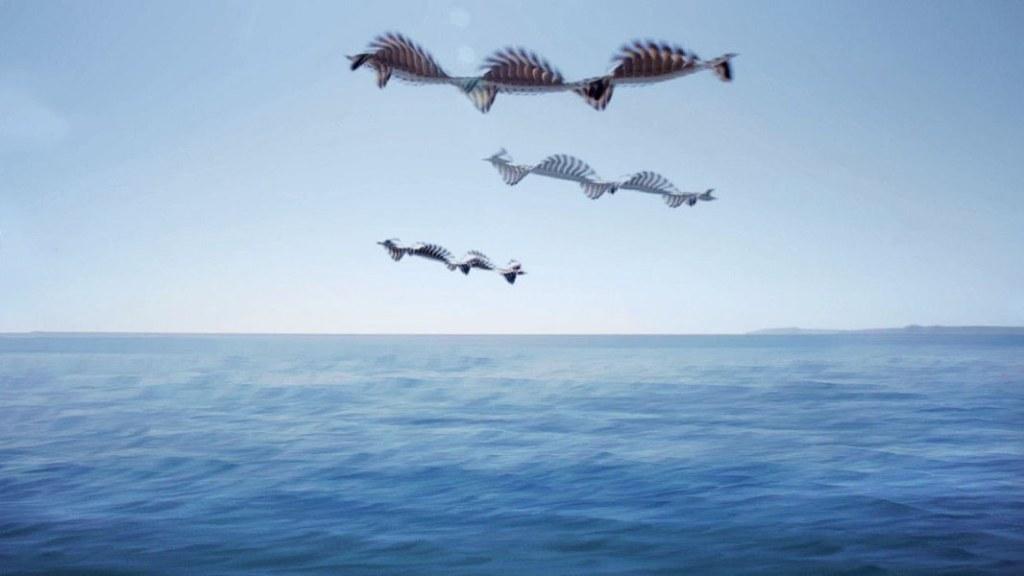 Xavi Bou - Ornithographies-4