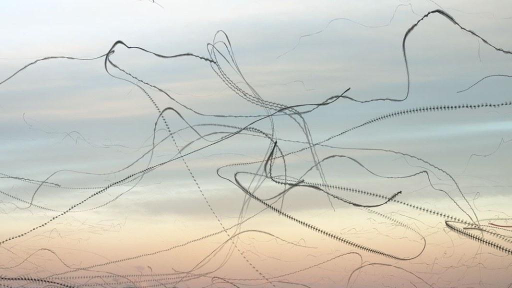 Xavi Bou - Ornithographies-5