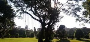 Tree in Taipei park