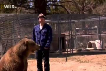 Hollywood's Killer Bear (2010)