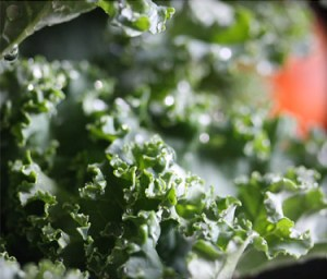 375x321_truth_about_kale_features