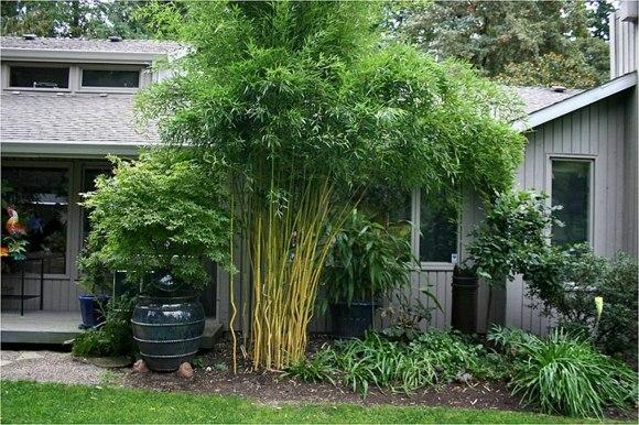 Du bambou dans votre jardin moving tahiti for Idee deco bambou