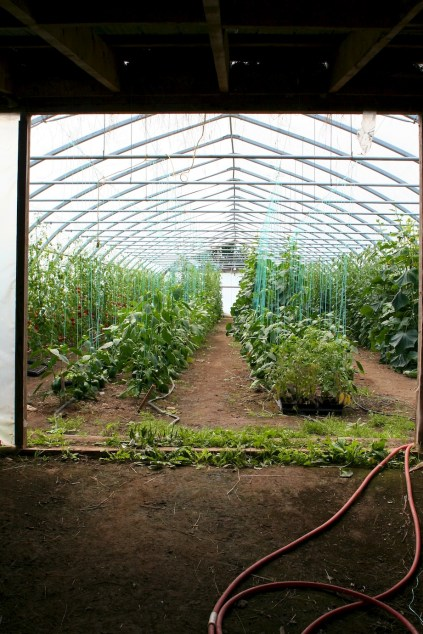 greenhouse at ironwood farm