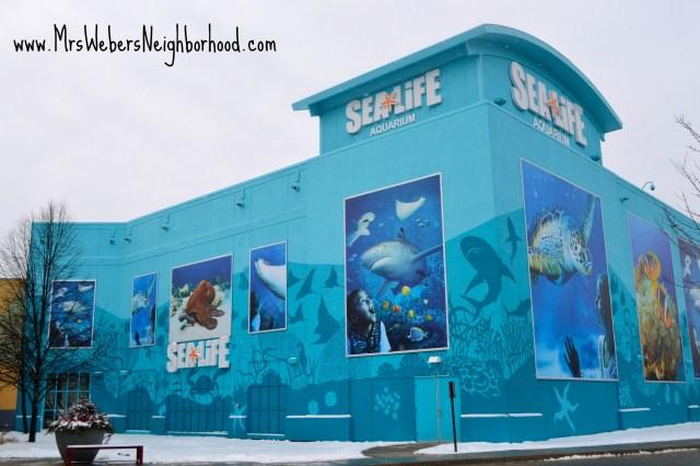 Tips for Visiting SEA LIFE Michigan Aquarium #SEALIFEMI   Mrs. Weber's