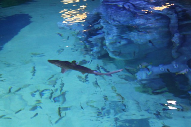 , seahorses and stingray, have already been delivered to the aquarium