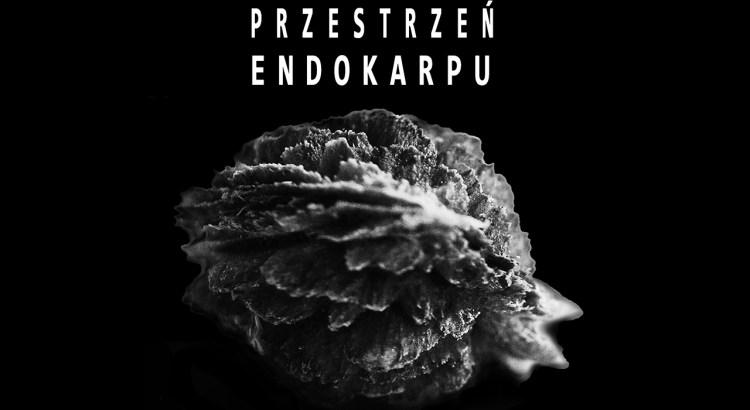 Przestrzeń endokarpu