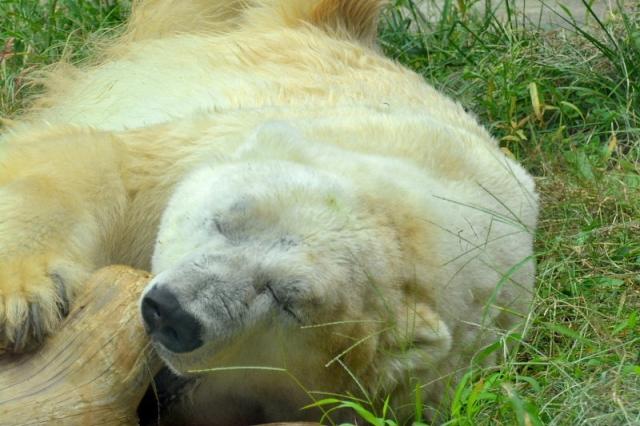 White Bear Z USDJPY 評価・検証・レビュー