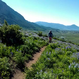 Lupine Mountain Bike Trail near Crested Butte