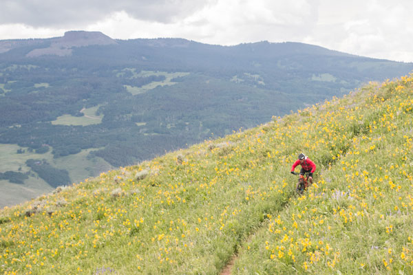 Biker in a high alpine meadow south of Crested Butte, CO