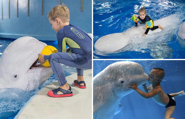 delfinyi