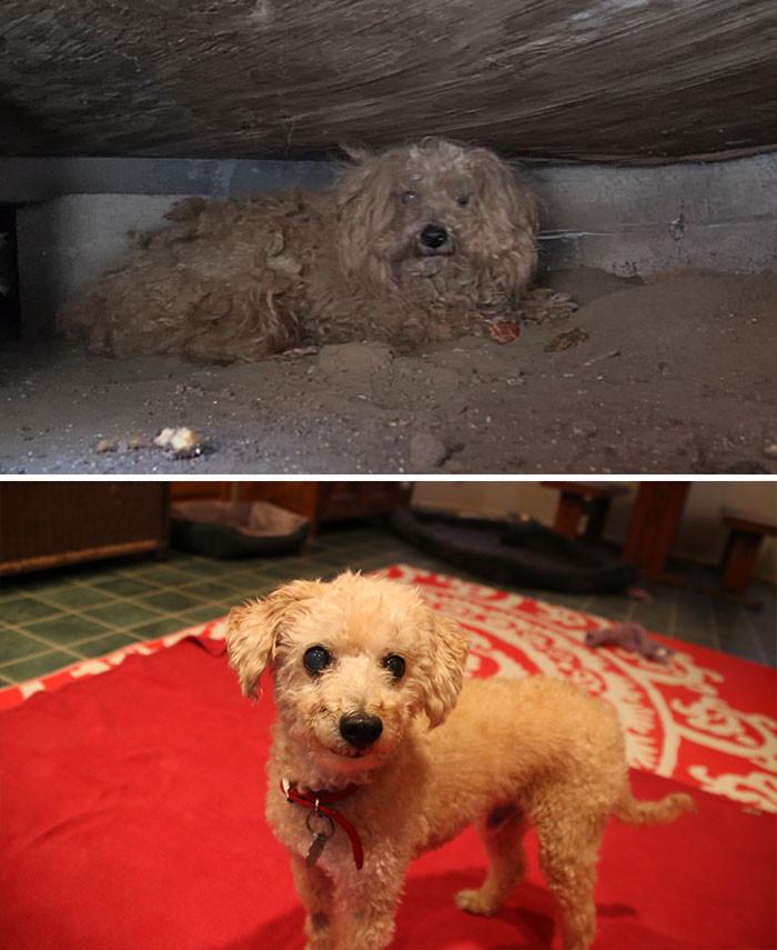Хозяин Вуди умер, и пес очутился на улице. К счастью, новые хозяева вновь вернули его к жизни Счастливый конец, собаки, спасение
