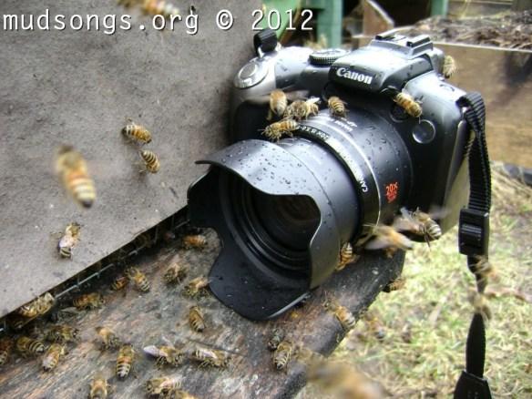 Hive # 3. (April 8, 2012.)