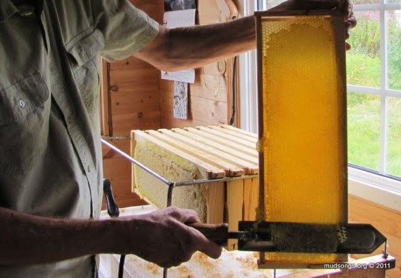 Decapping a frame of honey with a hot knife. (Oct. 1, 2011.)