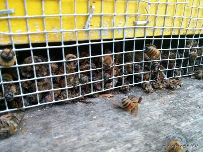 Dead bees stuck behind  6mm mesh.  Oh well. (Dec. 10, 2015.)