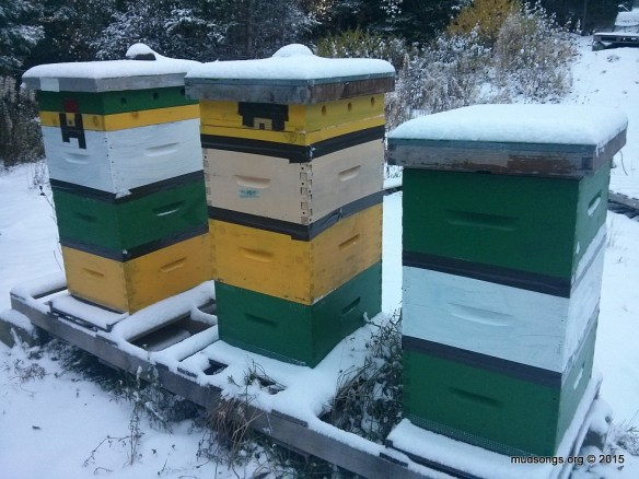 Most of the bees are clustered down deep where they should be. (Nov. 04, 2015.)